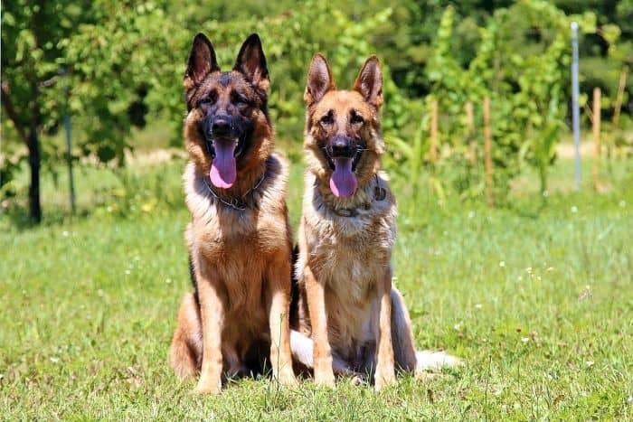 Most Profitable Dog Breeds