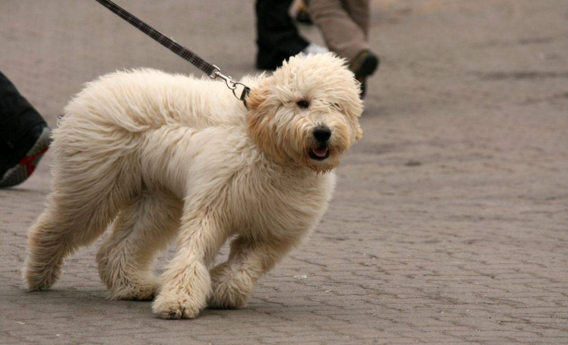 Strong Dog Leashes
