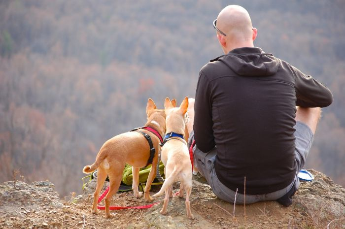 Tents for Camping with Your Dog