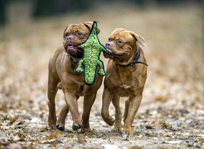 Toy Brands for Dogs