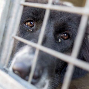 adopting puppy mill dog