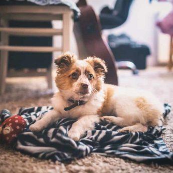 best-dog-blankets