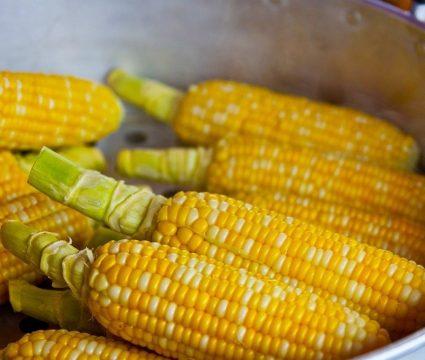dog-ate-corn-cob