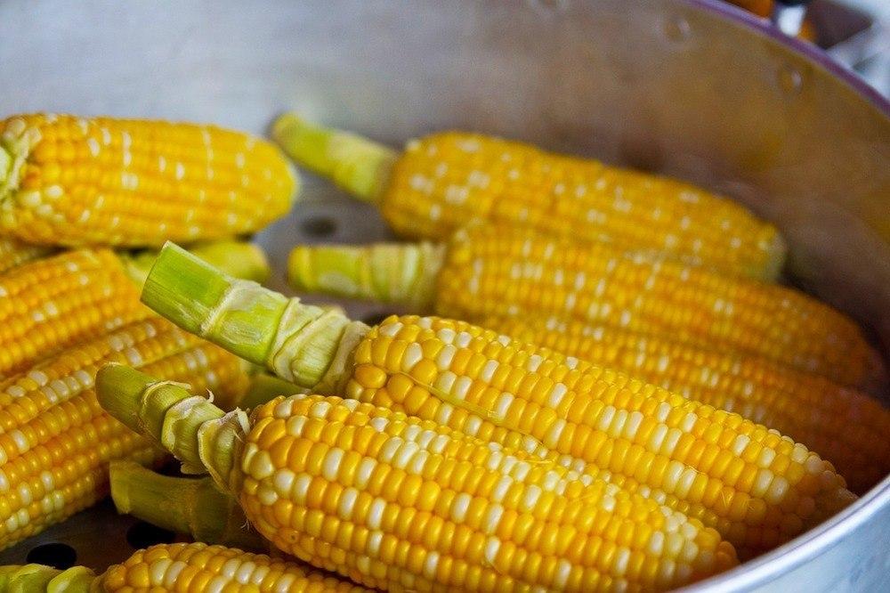 Help - My Dog Ate a Corn Cob! Should I