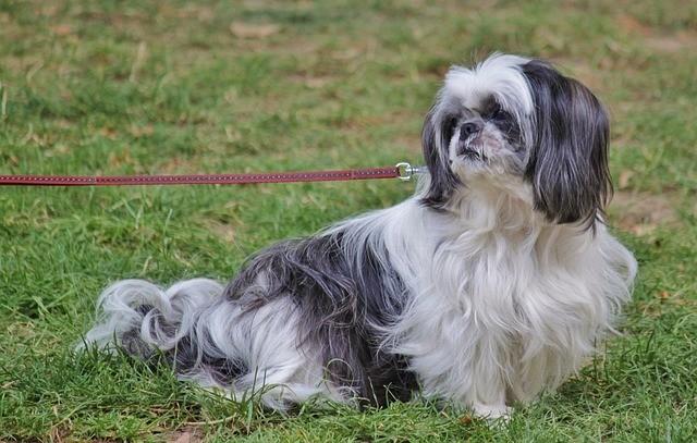 dog-potty-on-leash