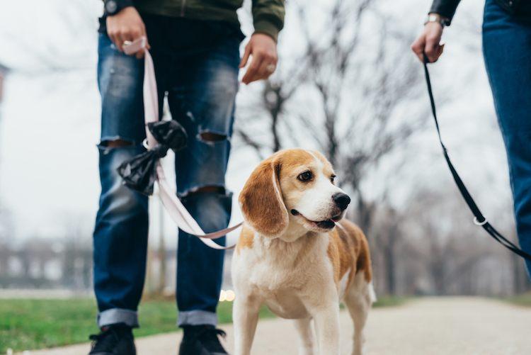 dog-walking-greeting