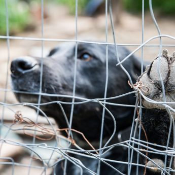 how to spot puppy mill