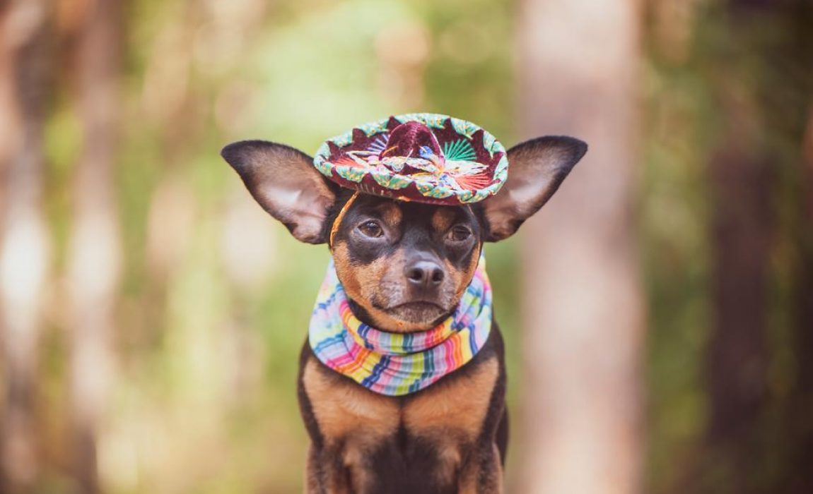 50+ Mexican Dog Names: Name Ideas For Your Perro!