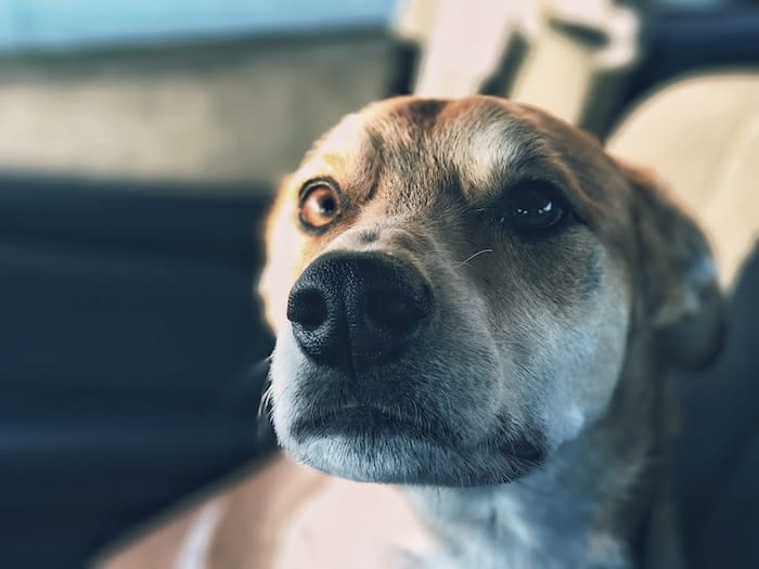 nervous-dog