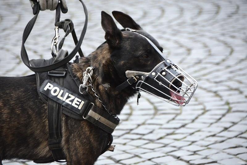 police-dog-names