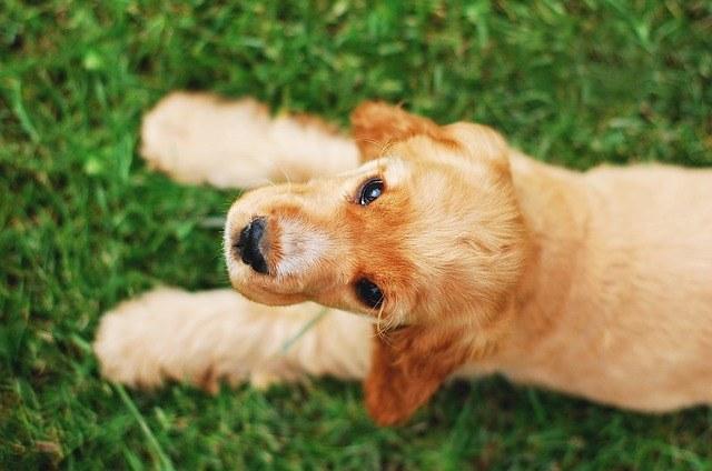 pottytraining puppy mill dog