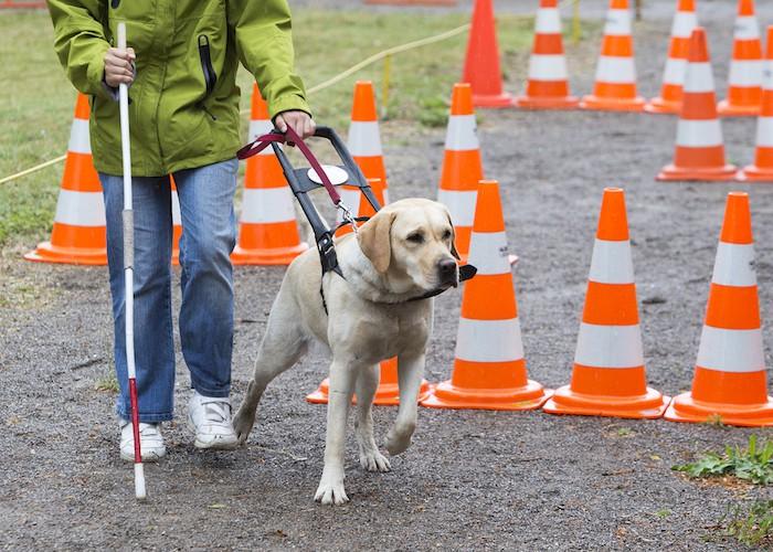 service dog for blind