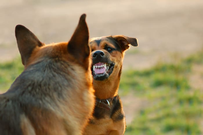 what to do if a dog attacks your dog