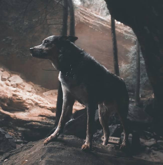 wolf-den