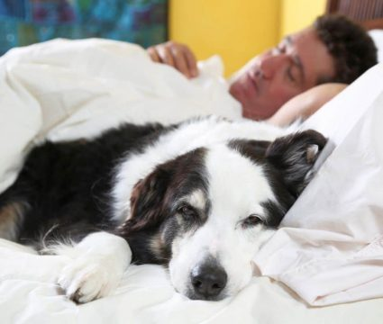 Can I Give My Dog Claritin? Is Claritin Safe For Canines?