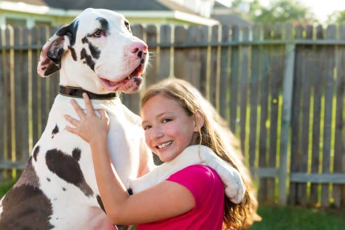 How much does a Great Dane cost