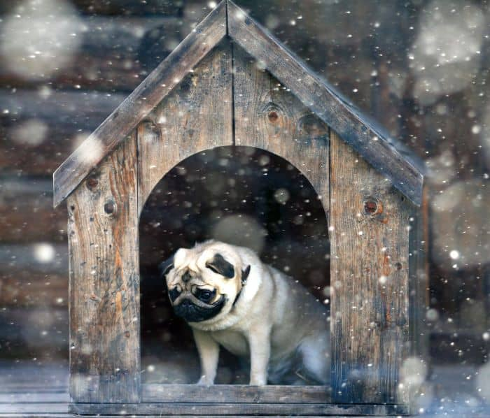 6 Best Dog Houses [2019 Reviews]: Ratings + Dog House