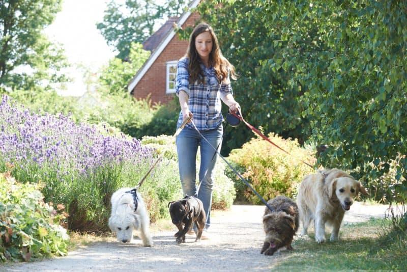 Pet Sitting Insurance