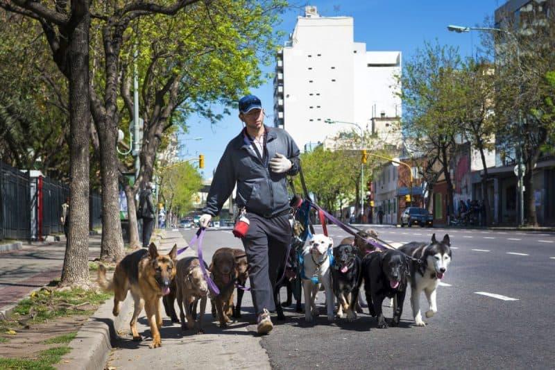 hire a dog walker