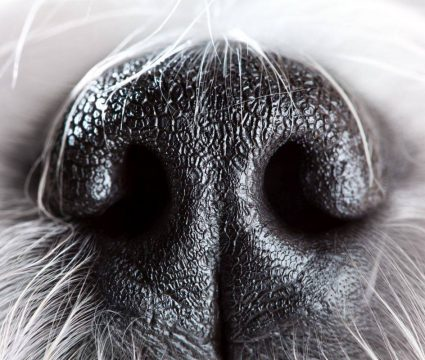 Dog with Stuffy Nose