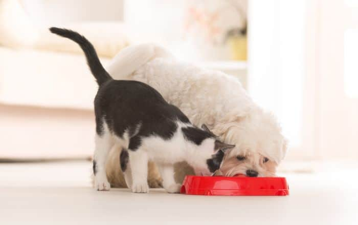 Dogs Who Eat Cat Food