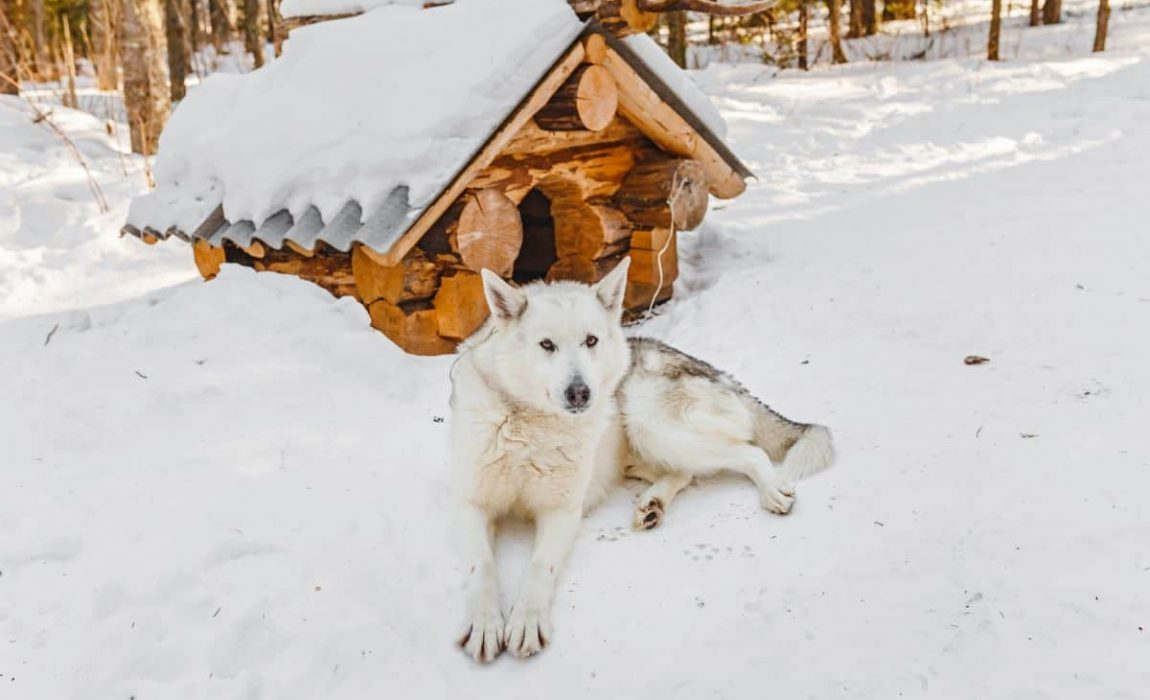 How To Insulate A Plastic Dog House 8 Ways To Keep Your Canine Cozy