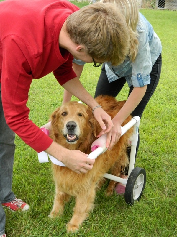 How To Make A Dog Wheelchair T