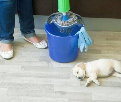 Pet Safe Floor Cleaner