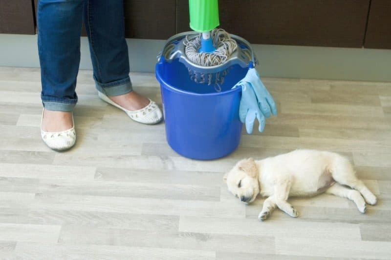 4 Best Pet Safe Floor Cleaners Which Cleaners Are Safe
