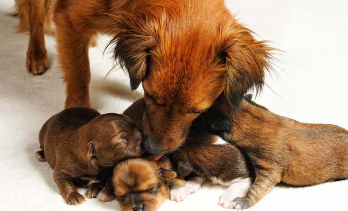 best dog breeds to sell