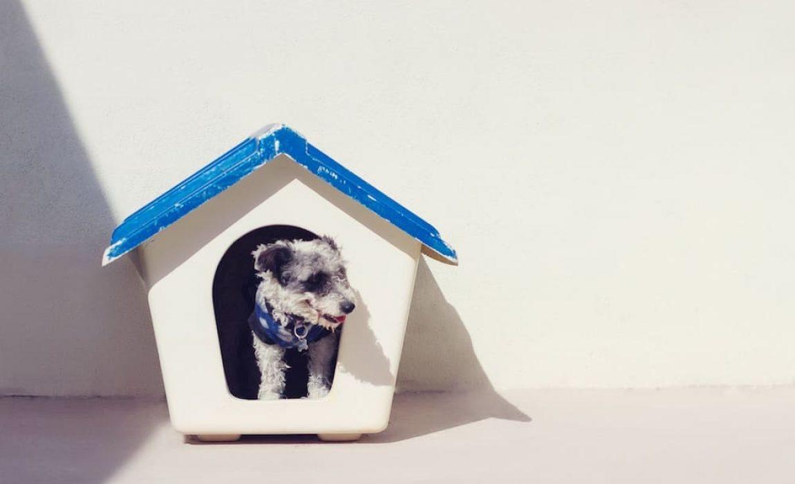 best-dog-houses