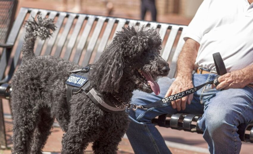 the best service dogs