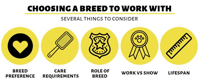 choosing-breeds