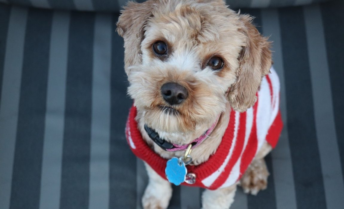 15 DIY Dog Sweater Designs Homemade Sweaters For Your Pup!