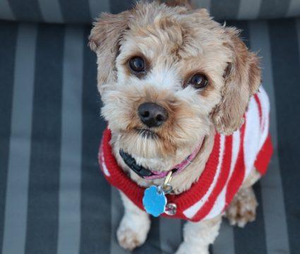 diy-dog-sweater