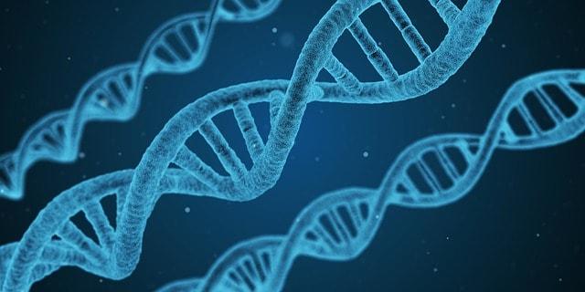 dna-dog-genetics