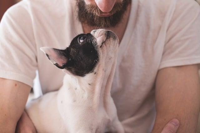 dog-adores-owner