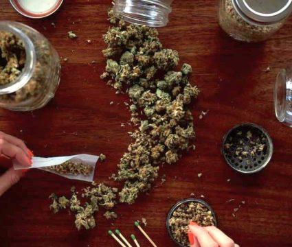 Dog-ate-weed