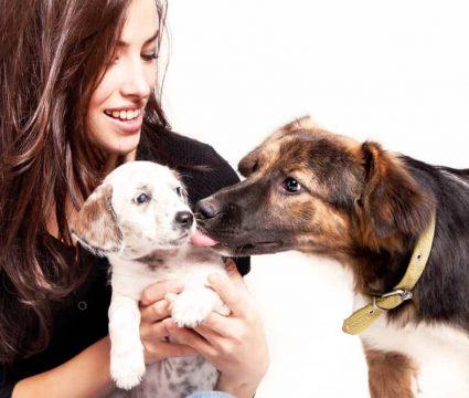 dog jealous of puppy