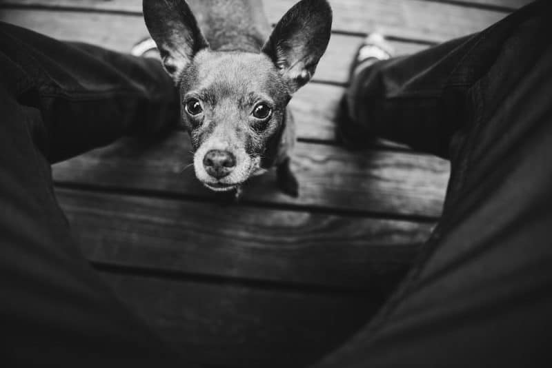 dog separation anxiety solutions step by step training plan. Black Bedroom Furniture Sets. Home Design Ideas