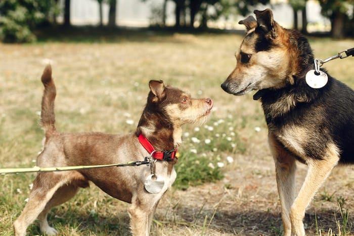 leash reactive dog