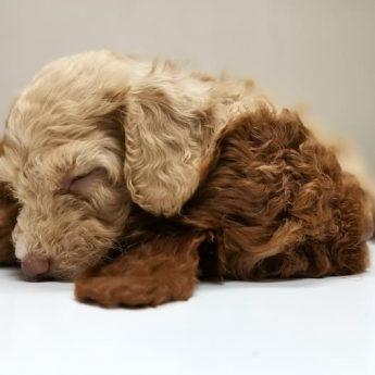 little-puppy-nature-nurture
