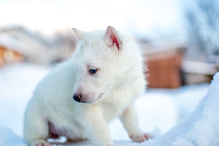 nervous-puppy