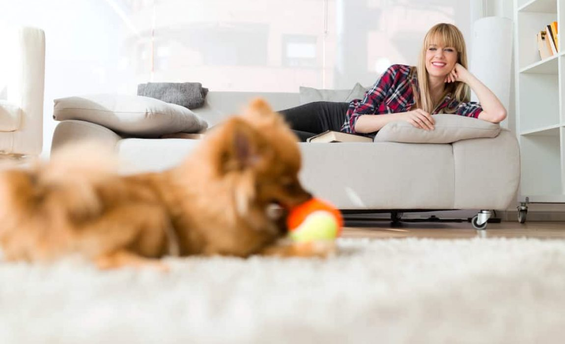 Do Pet Sitters Really Need Insurance? The Business of Pet