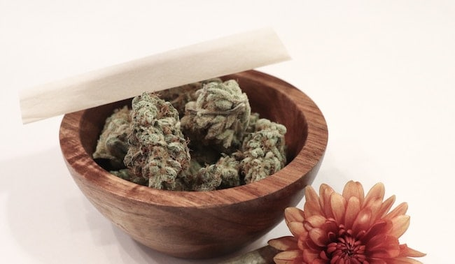 storing-marijuana-from-dogs
