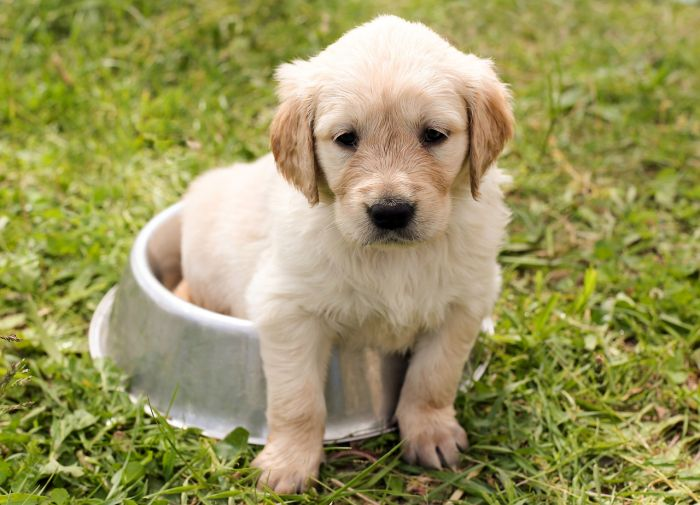 Best Food for Puppies