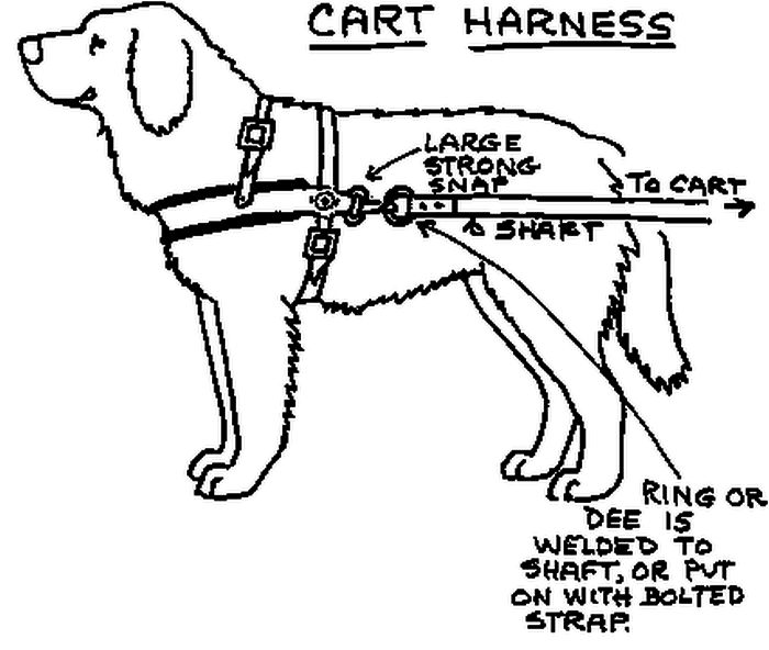 Diy Dog Harnesses How To Build A Custom Dog Harness