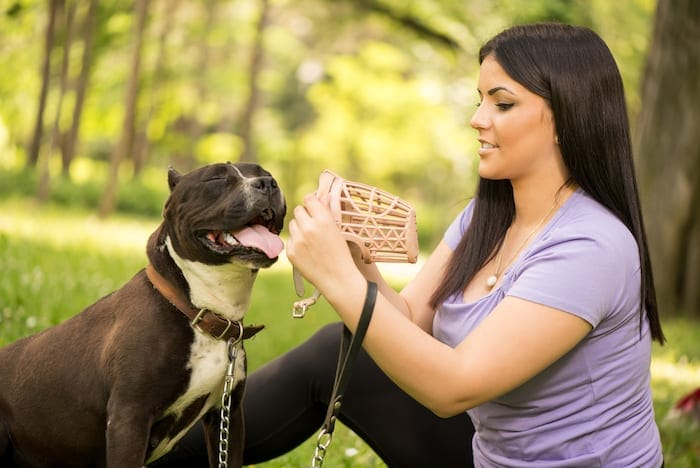 how to put muzzle on aggressive dog