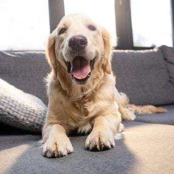 Pet Proof Furniture