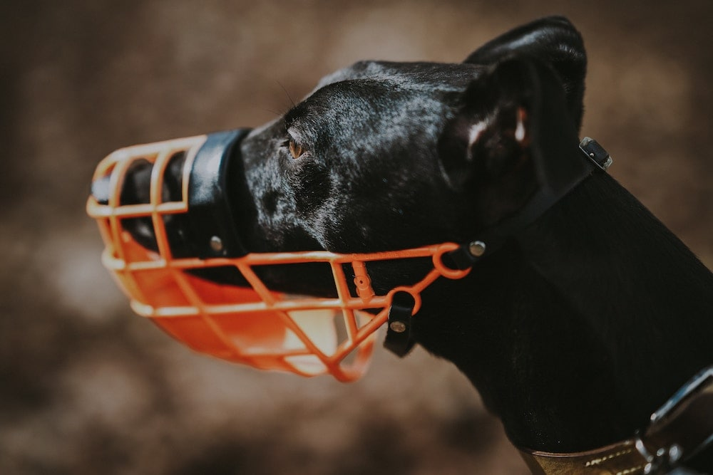 GROOM PROFESSIONAL Plastic Cage Muzzle Size Small